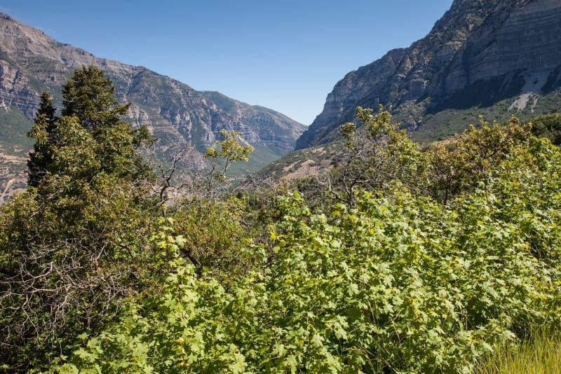 Provo jaru wibrująca zieleń w przodzie zdjęcie royalty free