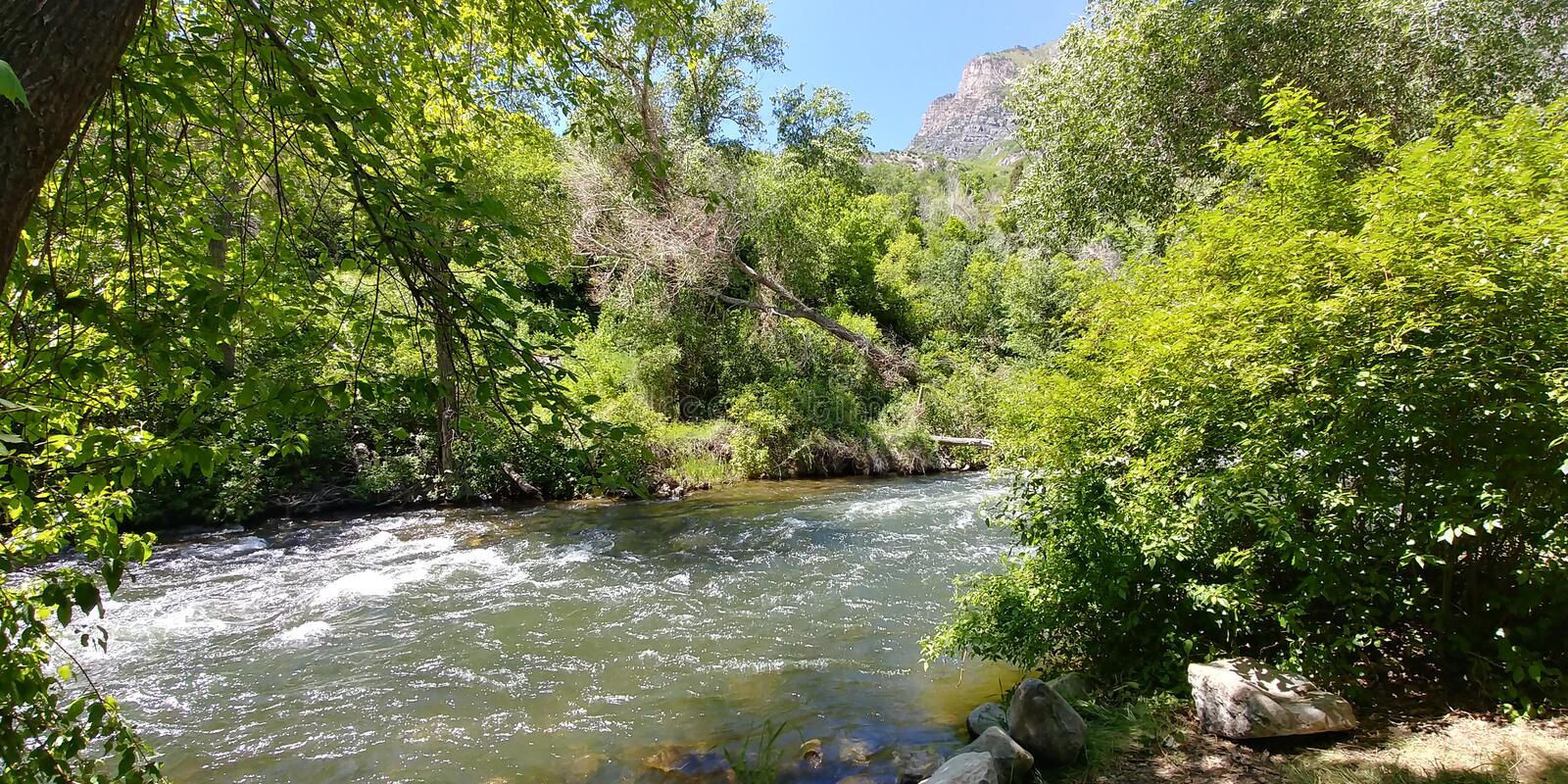 Provo river stock images