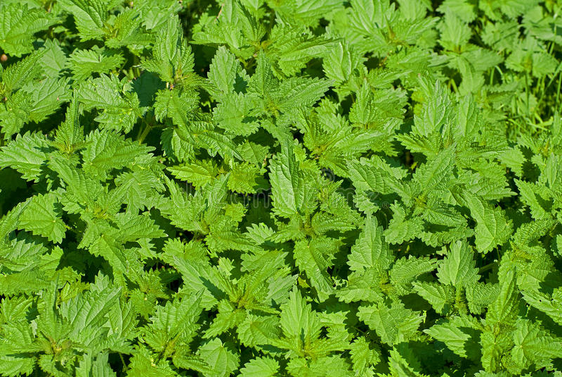 Download Provocação imagem de stock. Imagem de flora, weed, closeup - 26521115