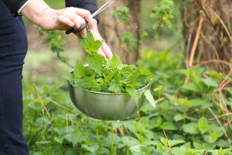 Provocação da colheita da mulher no jardim foto de stock royalty free