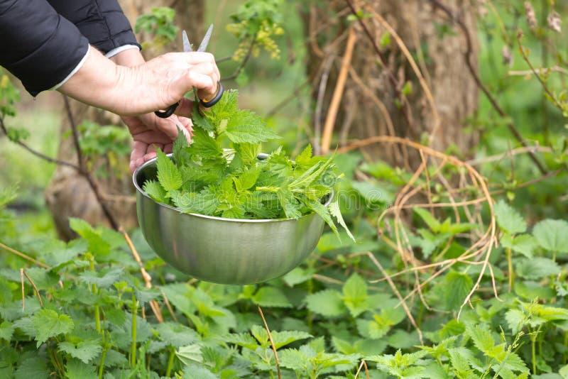 Provocação da colheita da mulher no jardim fotografia de stock royalty free