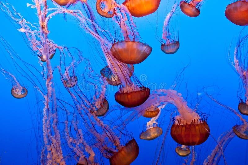 Provocação pacífica do mar fotografia de stock royalty free