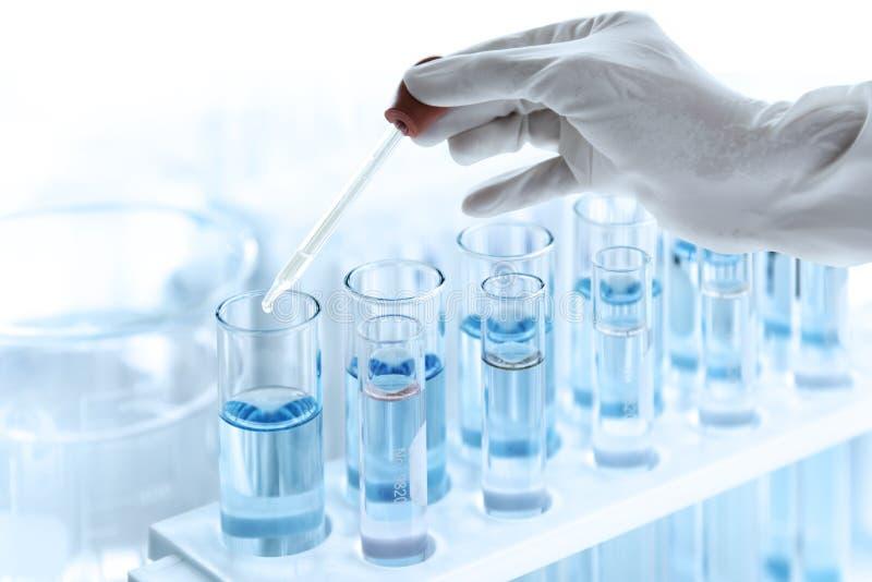 Provrör med flytande i laboratorium-, doktorshandinnehavdroppglass med stekflott eller den genomskinliga exponeringsglaspipetten, royaltyfria bilder
