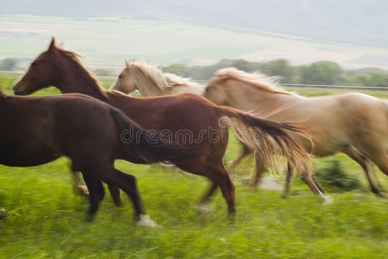 prowadzić koni. obraz royalty free