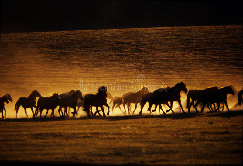Download Prowadzić koni. zdjęcie stock. Obraz złożonej z łąka, koń - 3647716