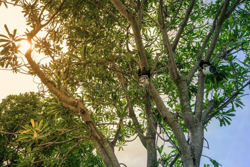 Proyector que cuelga en el árbol adornado en el jardín fotos de archivo libres de regalías