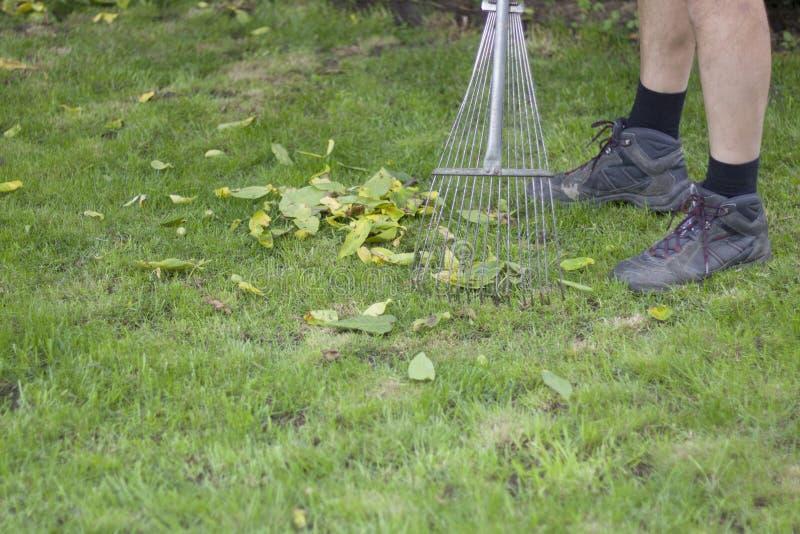 Prozess der Reinigung des Rasens von gefallenen Blättern mit Rührstangen lizenzfreie stockbilder