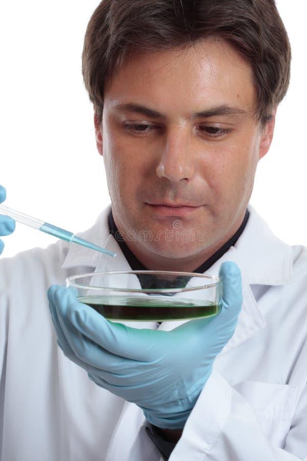 Prueba del investigador del científico que analiza el trabajo de laboratorio imagen de archivo