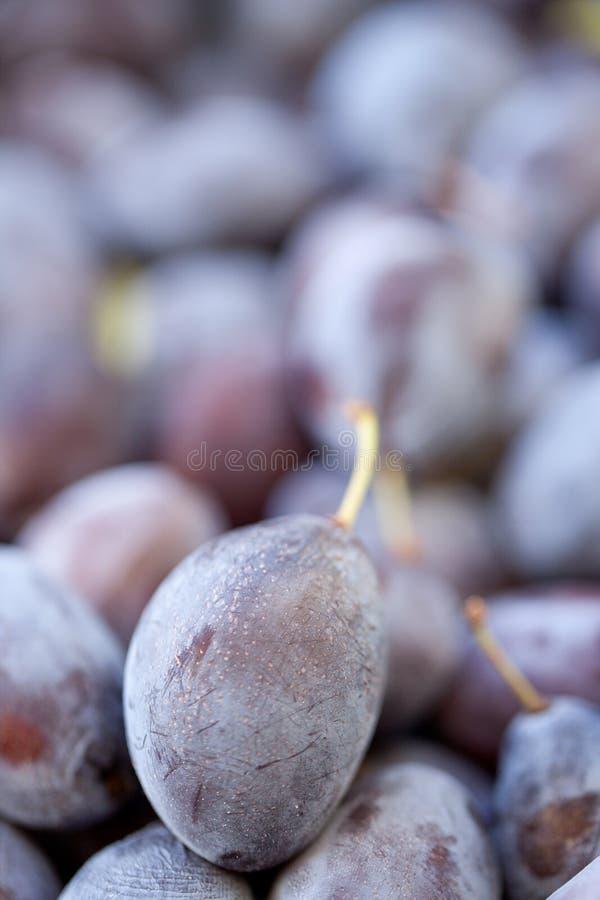 Prugne di susina selvatica (insititia del Prunus) immagini stock