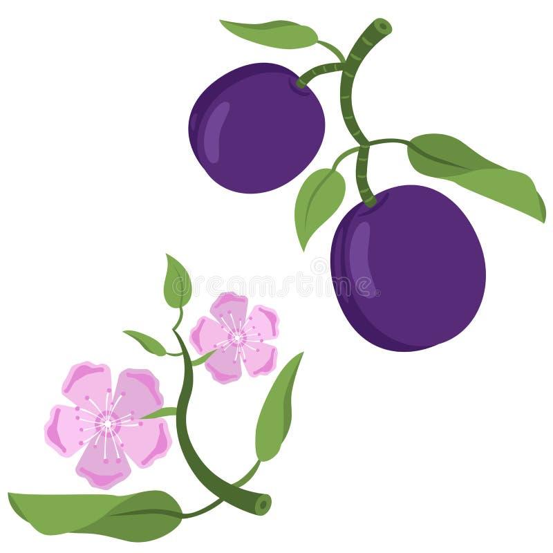 Pruimfruit en bloemen vector illustratie