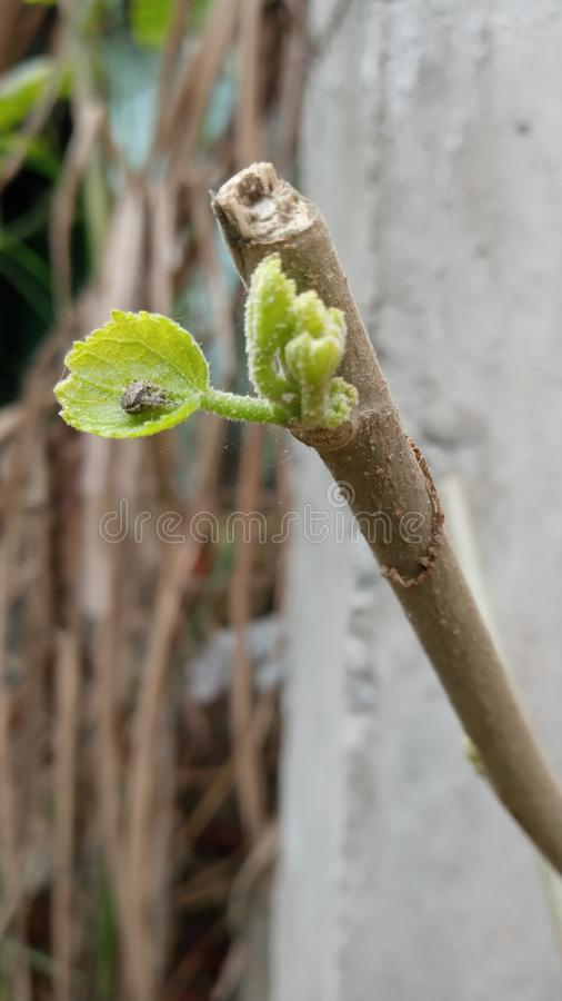 It is a prund steam with a new shoot. The plant has been pruned then a new shoot is in growth stock photo