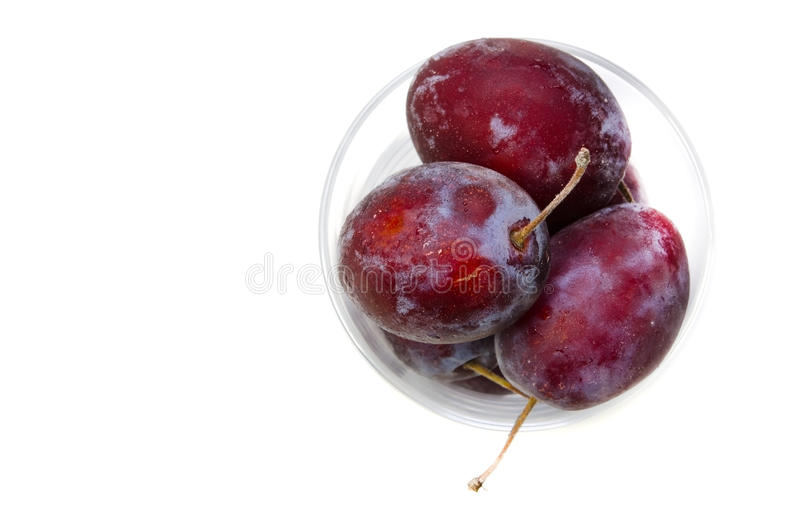 Download Prune stock photo. Image of health, ripe, isolated, healthy - 27041466