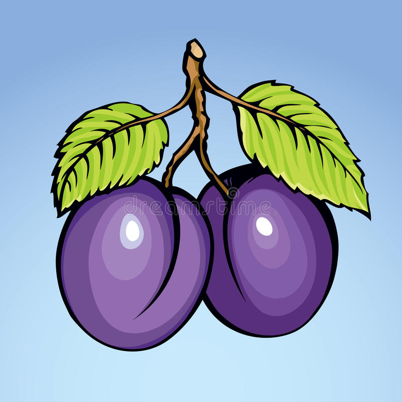 Prune, illustration de vecteur illustration stock