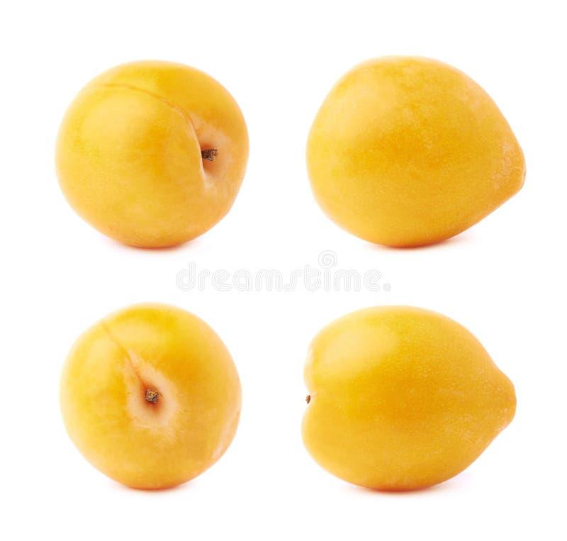Prune jaune simple de mirabelle d'isolement photographie stock