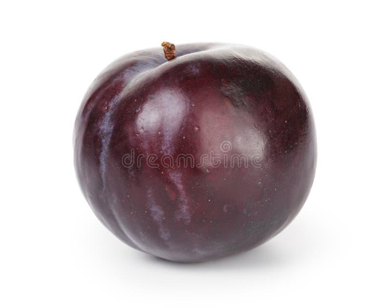 Prune noire simple image stock
