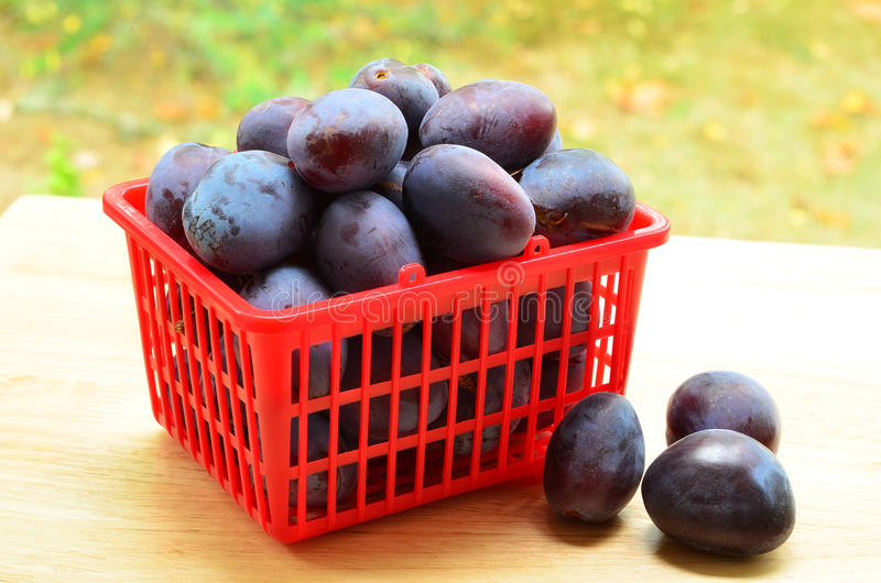 Download Prune plums stock image. Image of nature, plums, prune - 33292517
