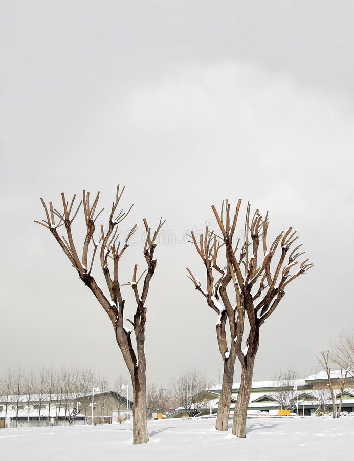 Pruned Trees Stock Images