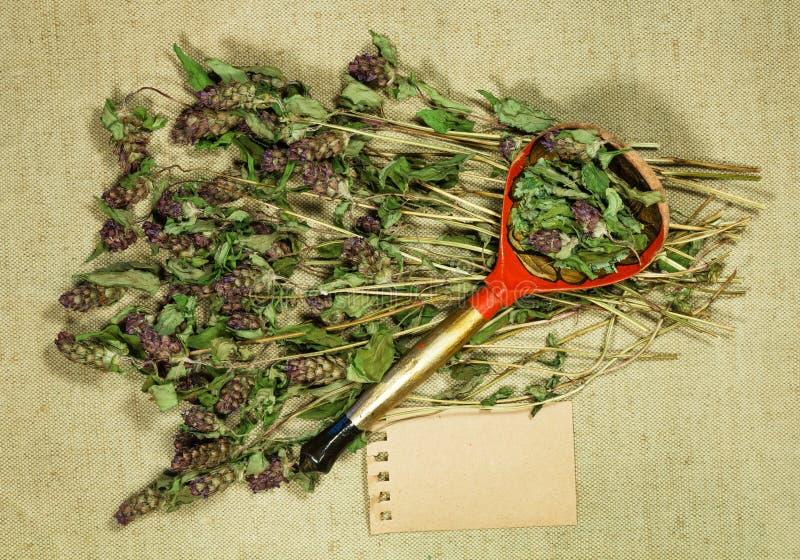 Prunella vulgar Erva seca para o uso na medicina alternativa, phytotherapy fotografia de stock royalty free