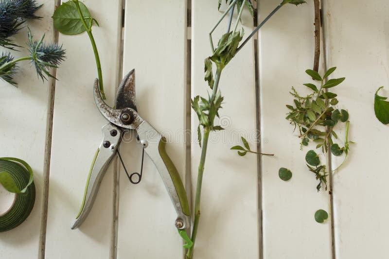 Pruner i cutted świezi kwiaty kłama na białym drewnianym stole Wydarzenie świeżych kwiatów dekoracja Kwiaciarnia obieg Ślubny ban fotografia royalty free