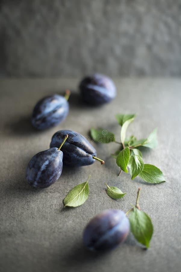 Prunes bleues fraîches avec des feuilles photographie stock libre de droits