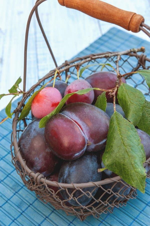 Prunes bleues mûres et juteuses dans un panier en osier dans un style rustique Action de grâces heureuse photo libre de droits