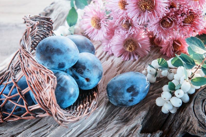 Prunes bleues mûres et juteuses dans un panier en osier dans un style rustique Action de grâces heureuse images libres de droits