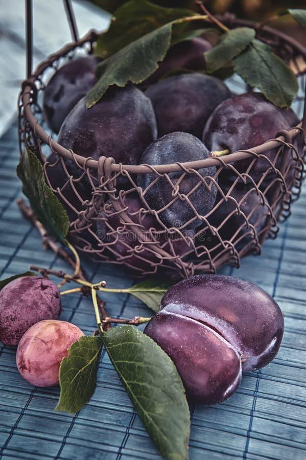 Prunes bleues mûres et juteuses dans un panier en osier dans un style rustique Action de grâces heureuse Copiez l'espace photos libres de droits