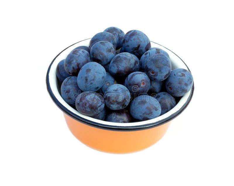 Prunes bleues mûres dans le bown d'isolement image stock