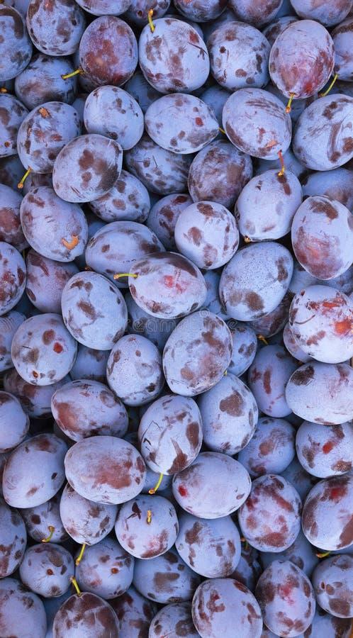 Prunes fraîches, fond de fruit image stock