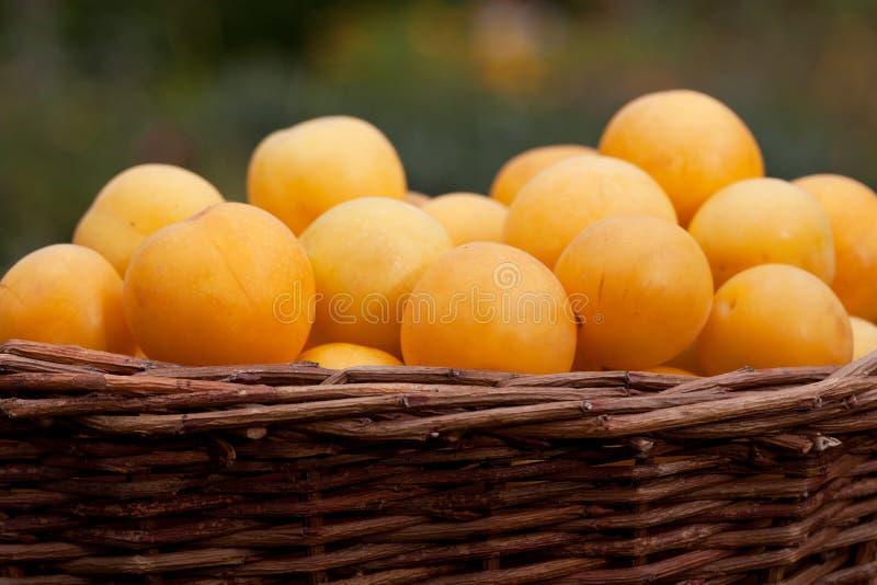 Prunes jaunes images stock
