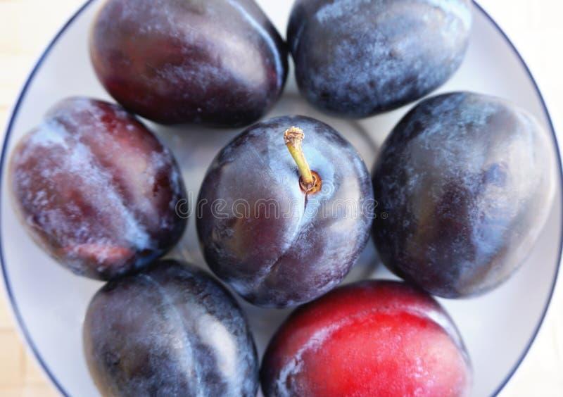Prunes mûres, Prunus du plat de thé, fin vers le haut de vue photo libre de droits