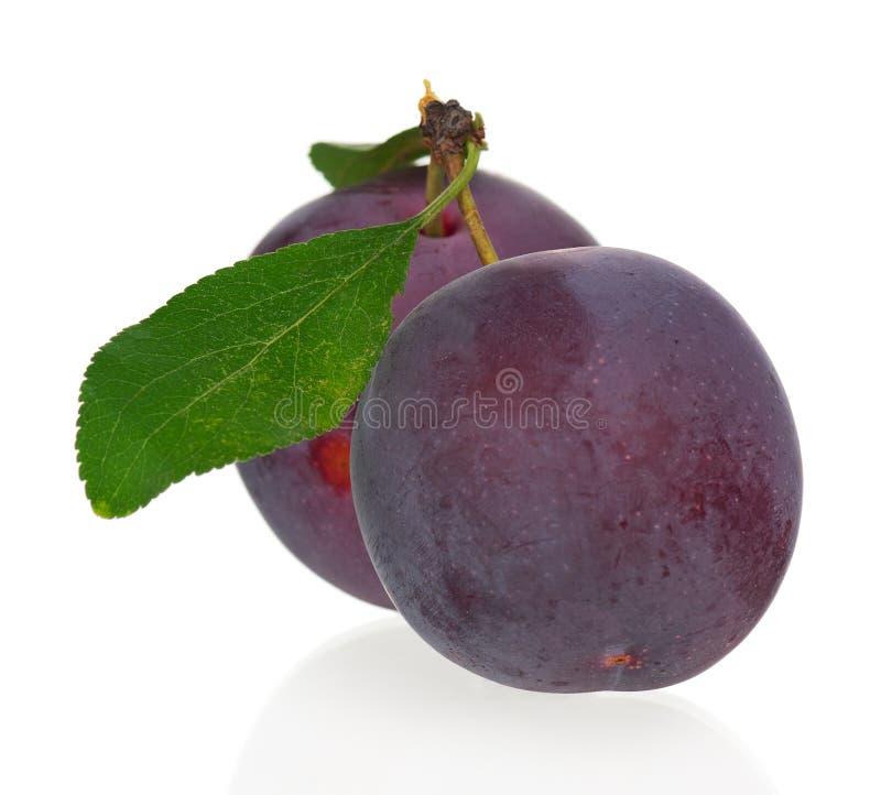 Prunes rouges image libre de droits
