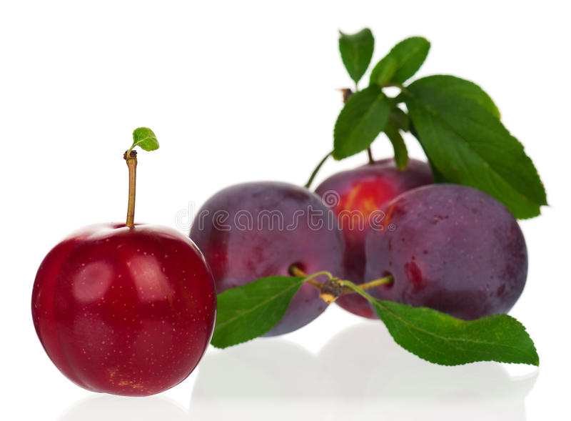 Prunes rouges photo libre de droits