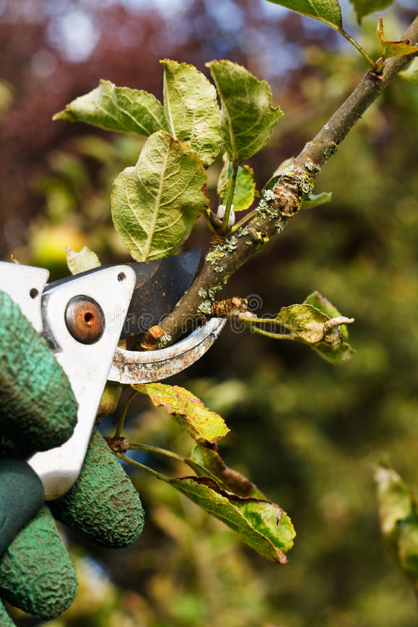 Download Pruning in the garden stock photo. Image of landscaping - 27218614