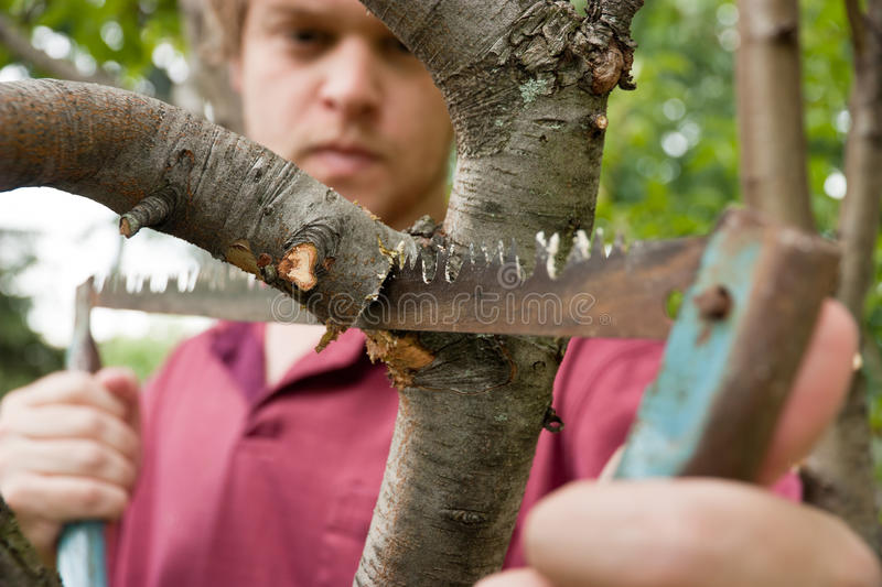 Pruning Tree royalty free stock photography