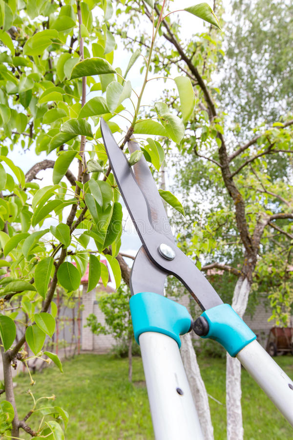 Pruning of trees. Pruning shears trees. top view stock images