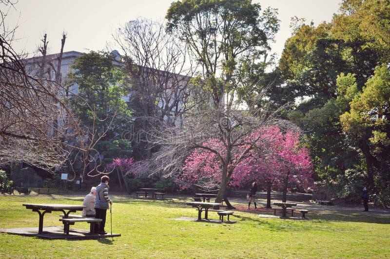 Prunus campananulata blossoms in Tokyo, Japan stock photography