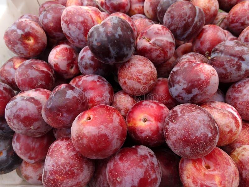 Prunus 'Flavor King Pluot' royalty free stock photos