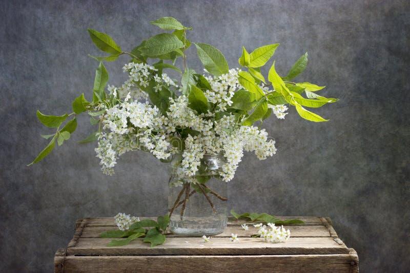 Prunus padus stockfoto