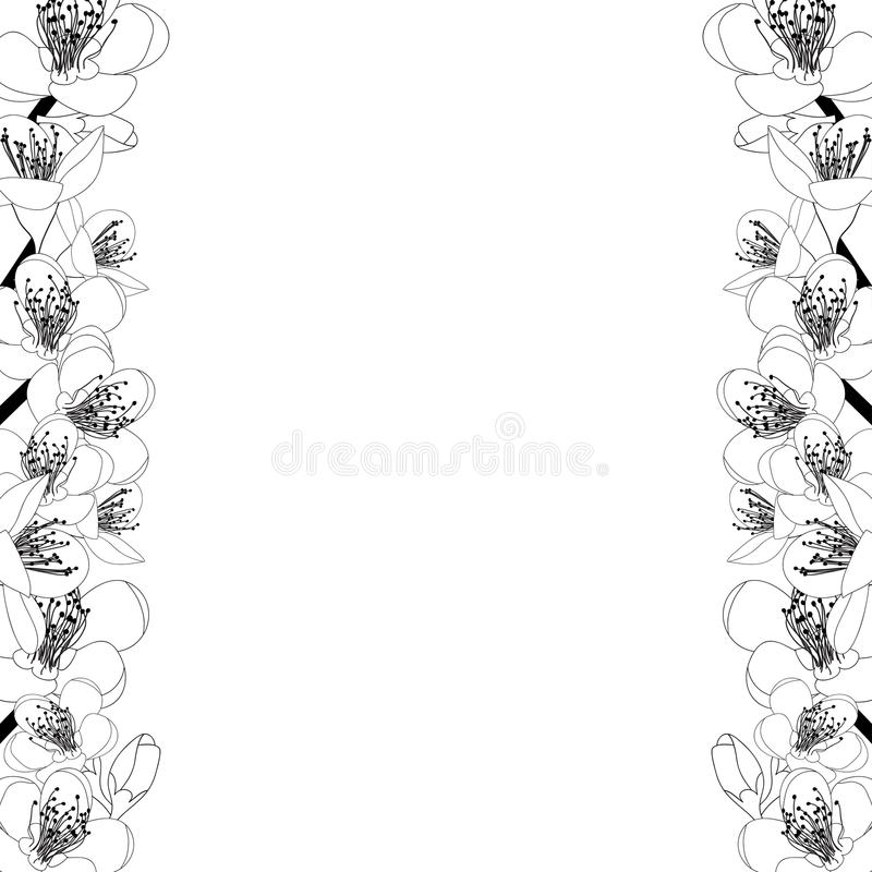 Prunus persica - Peach Flower Blossom Outline Border isolated on white Background. Vector Illustration. Prunus persica - Peach Flower Blossom Outline Border royalty free illustration