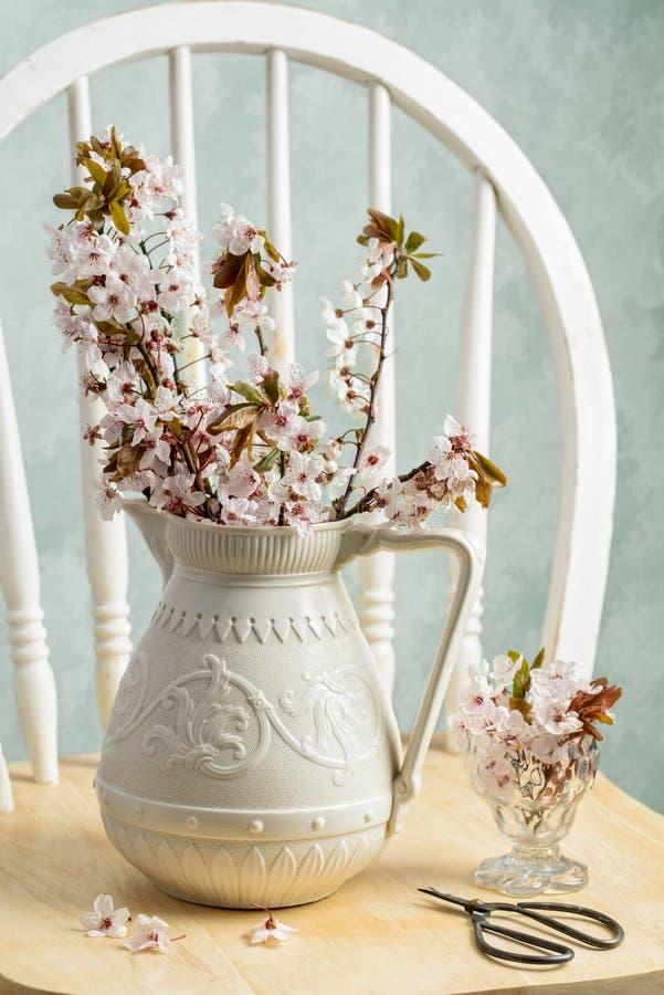 Prunusvårblomning royaltyfri bild