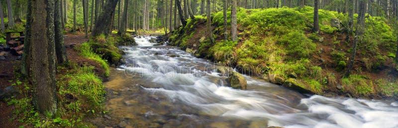 Prut-Fluss im wilden Wald lizenzfreie stockbilder