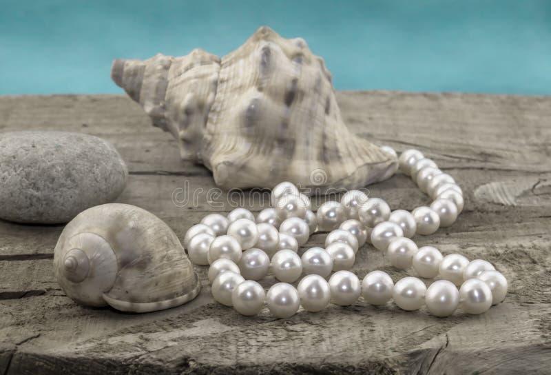 Pryda med pärlor på trä med skal och bevattna bakgrund arkivfoton