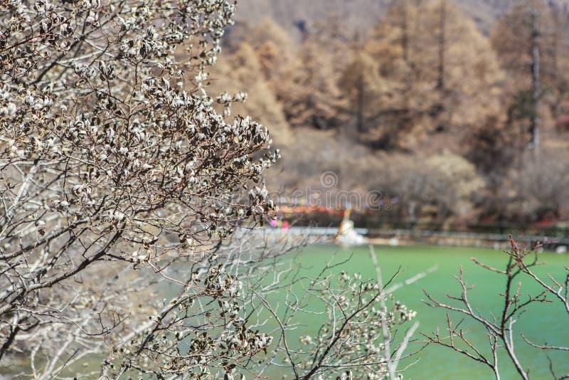 Pryda med pärlor sjön på den Yading naturreserven i Sichuan, Kina royaltyfri bild