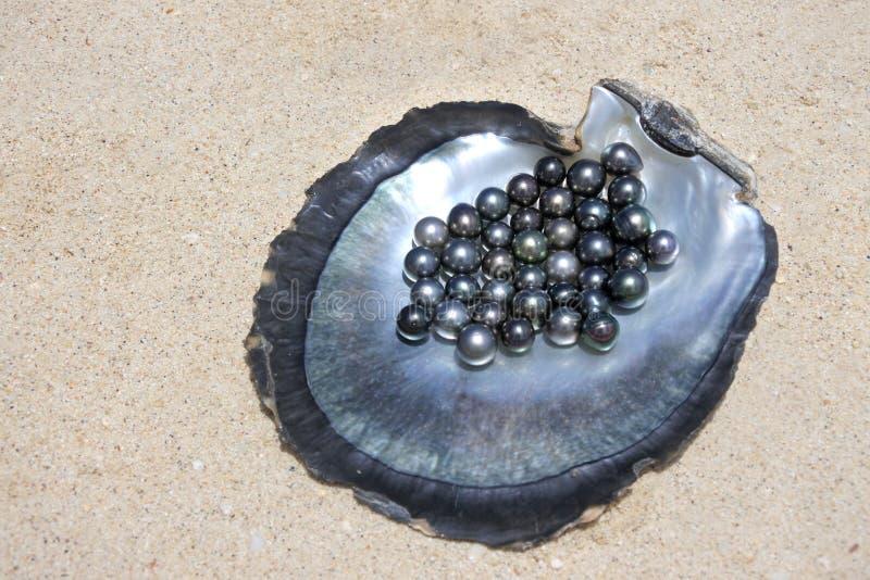 Pryder med pärlor den lekmanna- sikten för lägenheten av utmärkt rund Tahitian svart royaltyfri fotografi