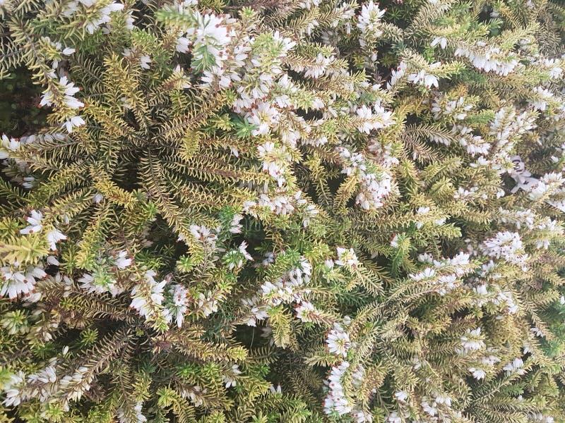 Prydlig frunchnärbild Ytbehandla fokusen Fluffig gräsplan sörjer frunchnärbild Jultapetbegrepp kopiera avstånd royaltyfria bilder