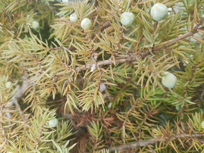Prydlig frunchnärbild Ytbehandla fokusen Fluffig gräsplan sörjer frunchnärbild Jultapetbegrepp kopiera avstånd royaltyfri foto