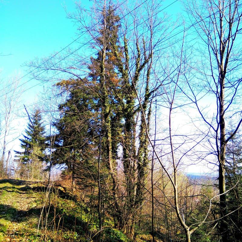 Prydlig skog för vår i de Carpathian bergen royaltyfria foton