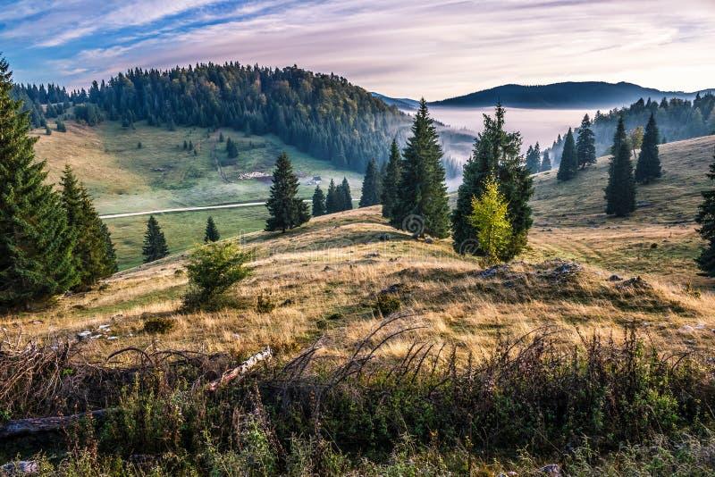 Prydlig skog på en backe i dimmiga berg på soluppgång royaltyfri foto