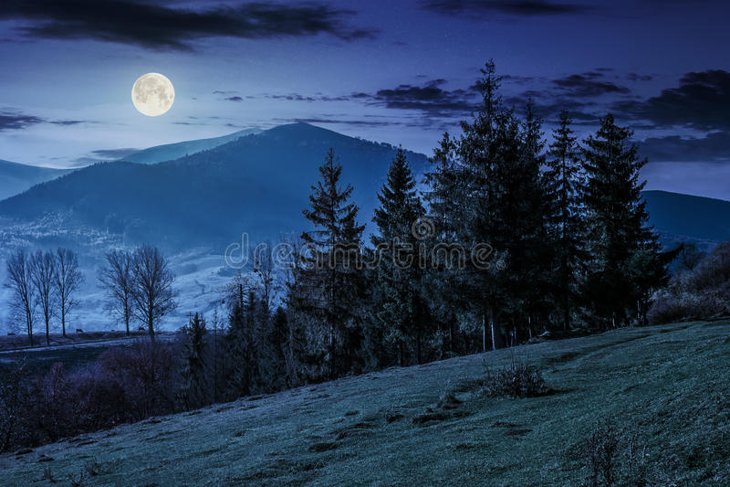 Prydlig skog på en bergbacke på natten arkivbilder